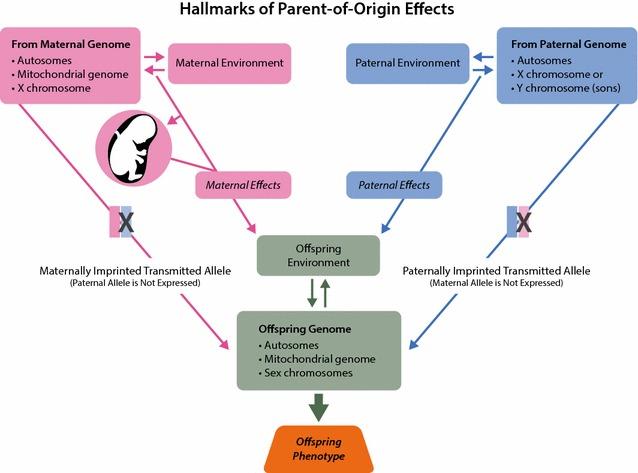 Parent of origin effect